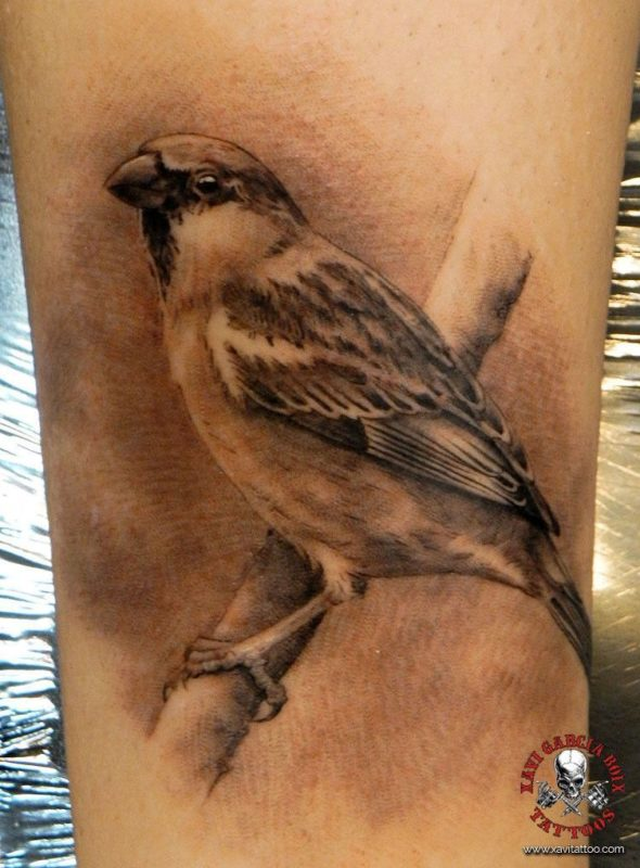 xavi garcia boix tattoo retrato realismo portrait realism tatuaje valencia diversos random gorrion naturaleza animales nature animals